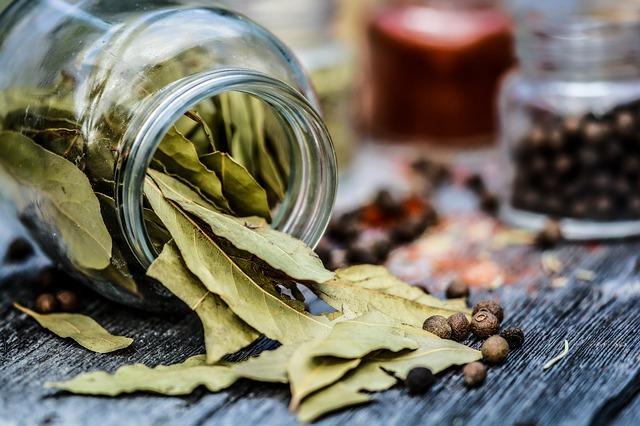 Le foglie di Alloro